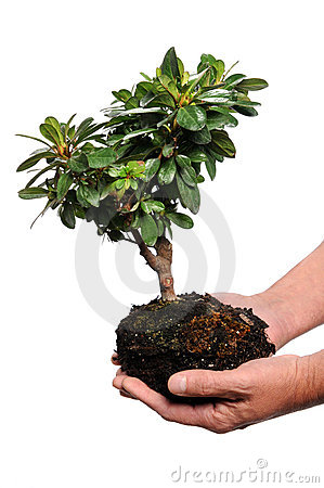 Man s Hands Holding Tree