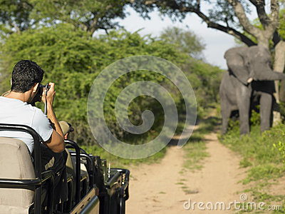 Man On Safari Taking Photograph Of Elephant