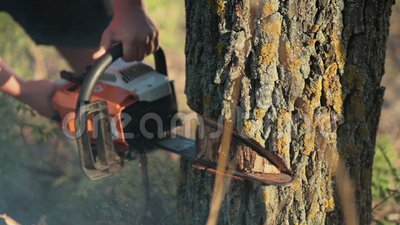 Man sawing a dry tree with chainsaw stock footage