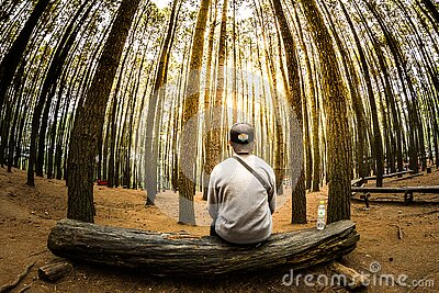 Man Siting On Log In Center Of Forest Panoramic Photo Free Public Domain Cc0 Image