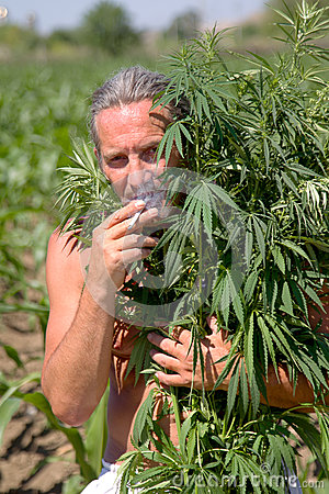 A man smokes a cigarette in the marijuana branches
