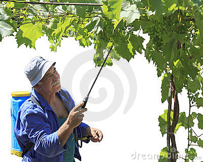 A man spraying his vine arbor