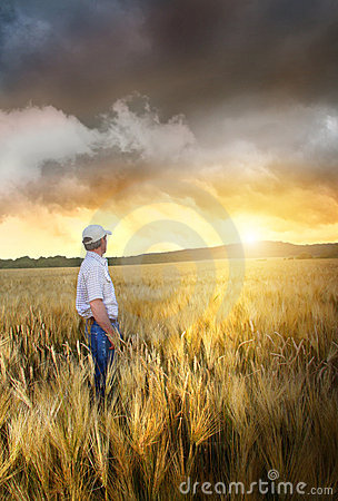 Free Man Standing In A Field Of Wheat Royalty Free Stock Photo - 15189355