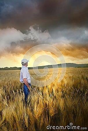 Man standing in a wheatfield