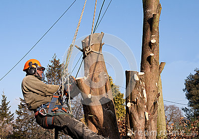 Man swinging from ropes