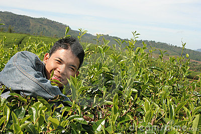 Man at tea plantation