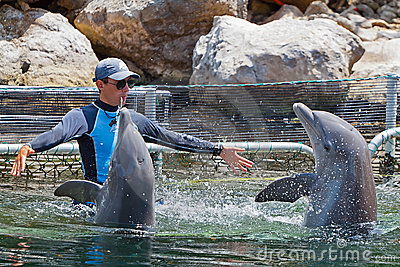 Man training dolphins in water park Editorial Stock Photo