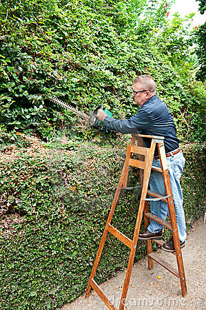 Man trimming vines