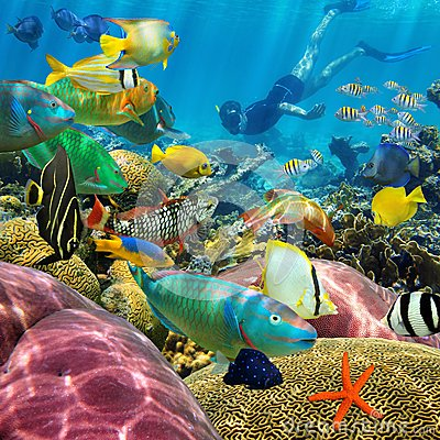 Man Underwater Coral Reef And Tropical Fish Stock Photo Image 39823219