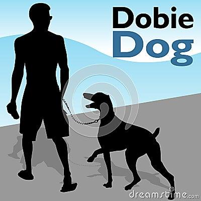 Man Walking Doberman Pinscher Dog