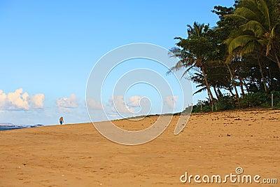 Man Walking on a Tropical Beach