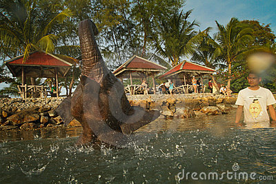A man washes his elephant in Gulf of Siam Editorial Stock Photo