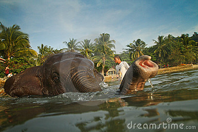 A man washes his elephant in Gulf of Siam Editorial Photo