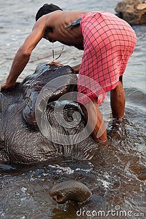 Man washing his elephant Editorial Stock Image