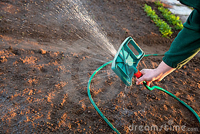 Man watering the ground