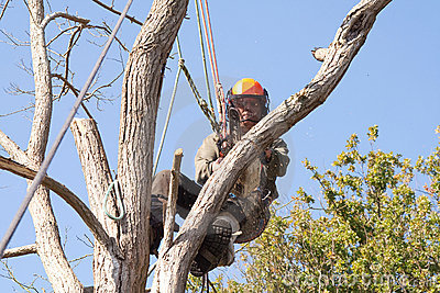 Stock Images Man wearing safety harness in a tree
