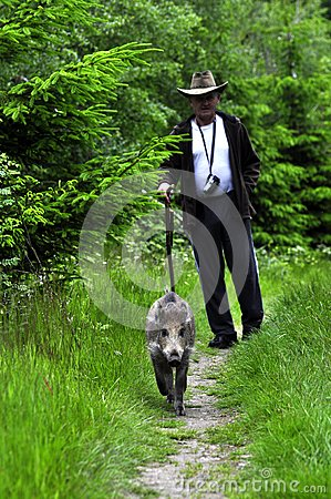 Man and a wild pig