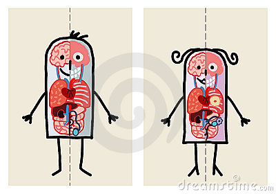 Man & woman anatomy