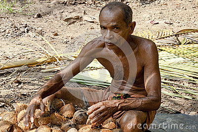 Man working on coconut plantation Editorial Image
