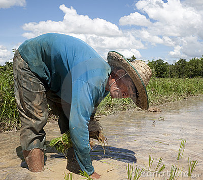 Man works on the paddy field, Asia