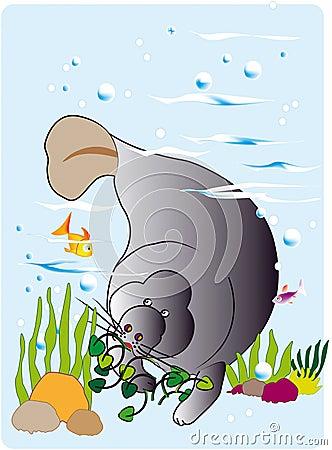 Manatee en su habitat natural