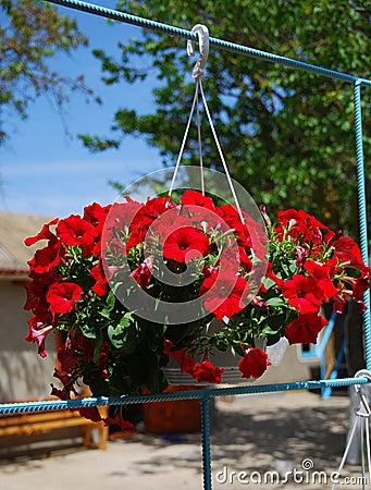 Mand van bloemen