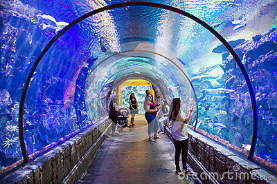 Mandalay Bay Aquarium Editorial Stock Image Image 43024764