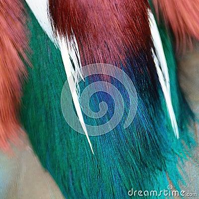 Free Mandarin Duck Feathers Stock Image - 47716081