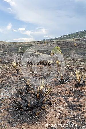 Paisagem queimada incêndio violento