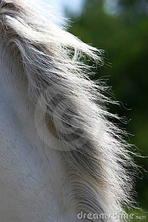 Mane of a horse