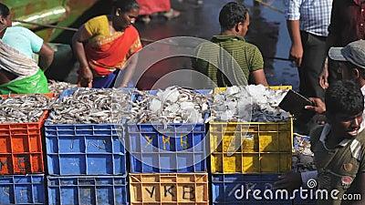 MANGALORE, LA INDIA -2011: Pescadores que transfieren la captura de pescados del mar a los camiones en octubre almacen de video