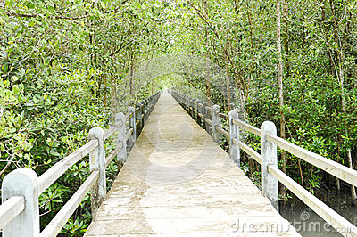 Mangrove forest conservation