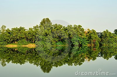 Mangrove Forest Reflection