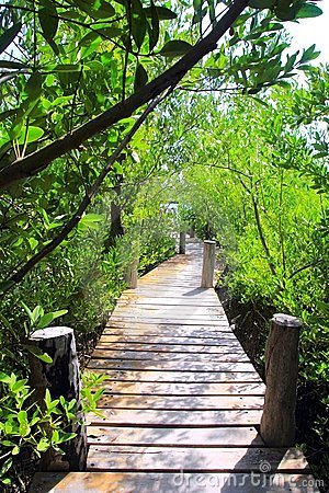 Mangrove forest walkway jungle mexico