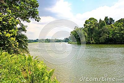 Mangrove river
