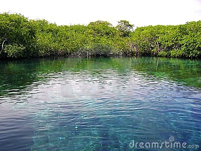 Mangrove river in central america mexico