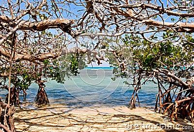 Mangrove of sea coast