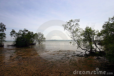 Mangrove swamps, tropical landscapes