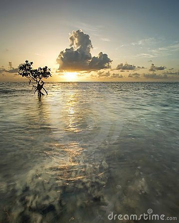 Free Mangrove Tree At Sunrise Stock Photos - 20093023