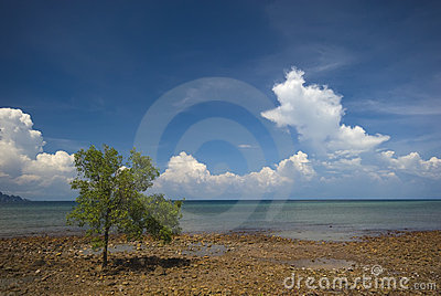 Mangrove tree at low tide