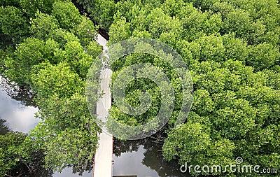 Mangroves  high