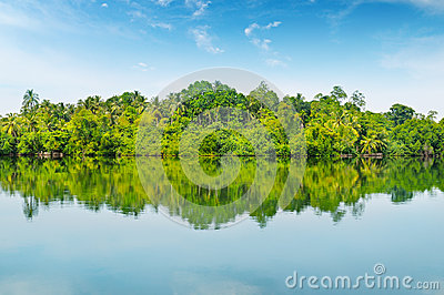 Mangroves and  sky