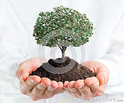 Fotografia stock: mani che tengono un albero con soldi