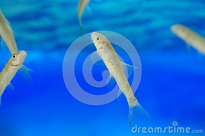 Manicure fish spa beauty treatment royalty free stock for A salon called fish