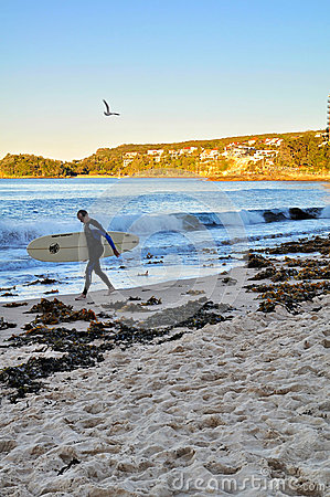 Manly surfer Editorial Stock Image