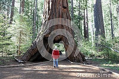 Mann gegen Baum