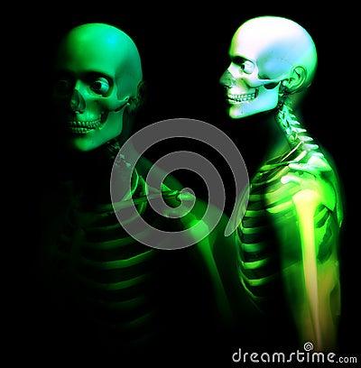 Mann-Knochen 25
