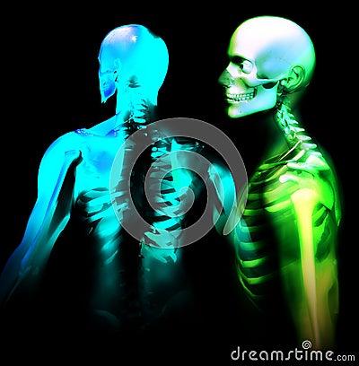 Mann-Knochen 27
