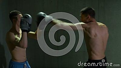 Mannelijke kickboxing vechters die in het in dozen doen van studio met concentratie en bepaling opleiden stock footage