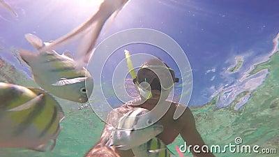 Manntauchen im Korallenriff Schule der Fische Unterwasser-selfie Szene stock video